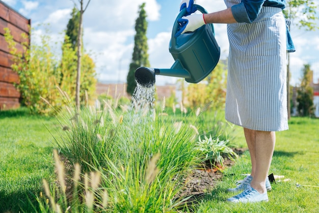 Gardener in apron. gardener wearing striped apron and white sneakers feeling very busy while watering his garden bed