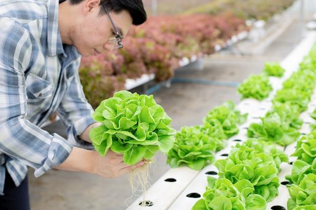 정원사는 유기농 야채를 모으고 있습니다.