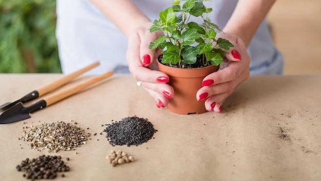 仕事中の庭師。屋内ガーデニングの趣味。植え替え用にアレンジされた基本的なツールセット。