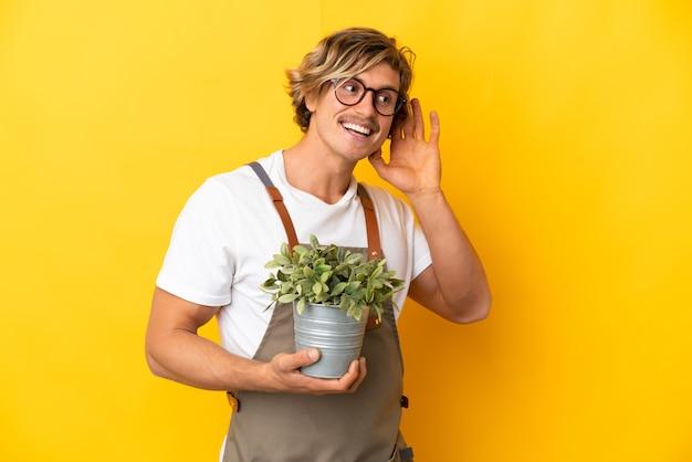 귀에 손을 넣어 뭔가를 듣고 노란색 벽에 고립 된 식물을 들고 정원사 금발 남자