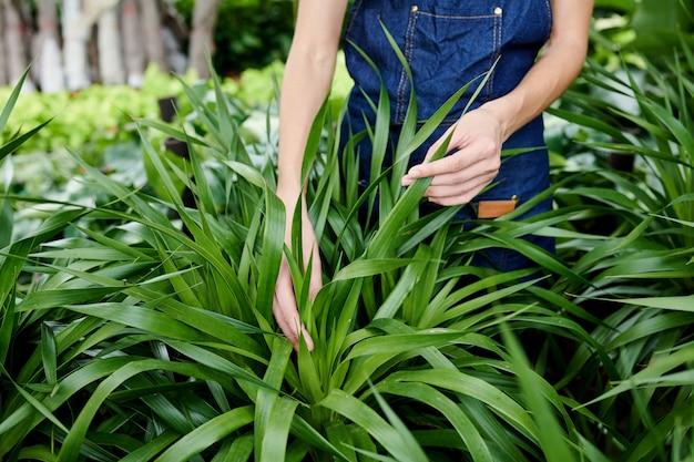 Gardener checking plant leaves