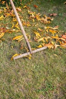 Осенью садовник чистит газон и собирает сухие листья с помощью старых граблей.