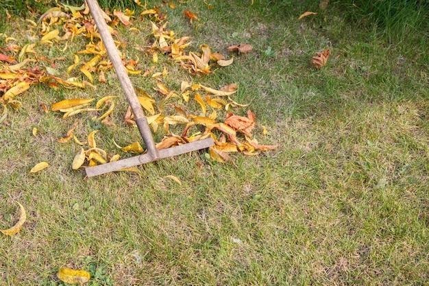 Осенью садовник чистит лужайку старыми граблями.