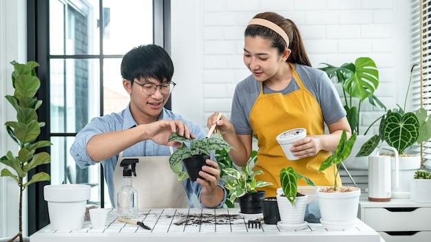 평상복 차림의 정원사 부부, 새 화분에 식물을 이식하고 함께 취미 활동을 하는 동안 집에서 방에 있는 식물을 돌본다