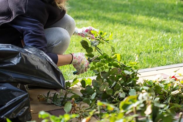 Садовник срезает кусты роз
