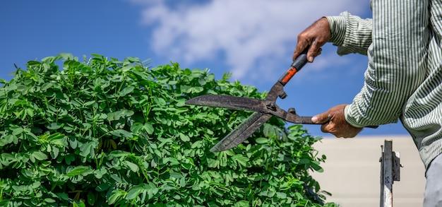 Un giardiniere nel giardino con una capanna taglia un albero con i ricci contro il cielo