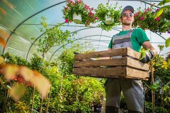 Gardener Greenhouse Work