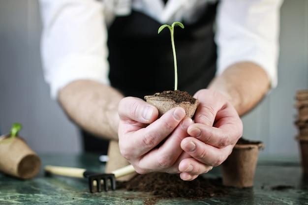 Стол для выращивания ростков для садовника