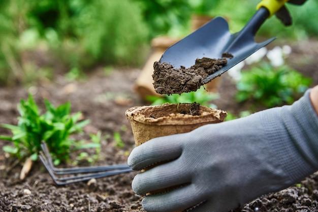 庭師は庭で野菜の植物を選んで植える手