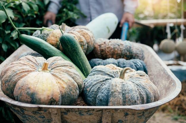 庭師は庭から野菜を収穫