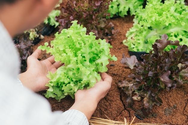 庭師は家庭菜園から野菜を収穫します。