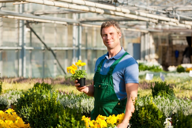 Gardener in his greenhouse with flowers
