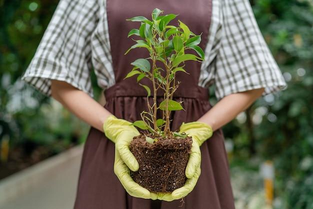 Садовник держит растение с земли перед ней. биолог пересаживает растение крупным планом. дарить жизнь растению