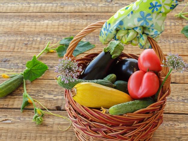 摘み取ったばかりのトマト、きゅうり、なす、古い木の板を背景にしたスカッシュが入った籐のかごを持っている庭師。収穫したばかりの野菜。