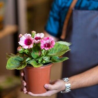 Садовник держит цветочное растение