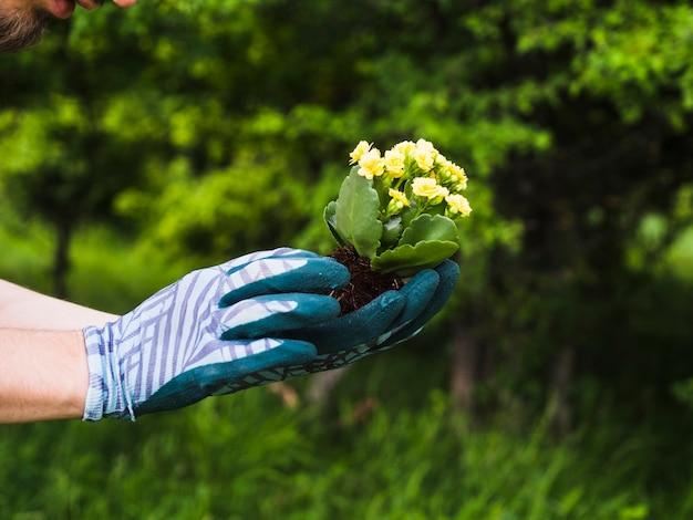 Садовник, занимающийся цветением растений