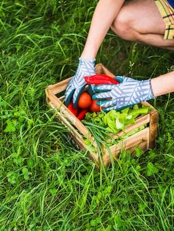 Gardener holding fresh vegetable in crate on green grass