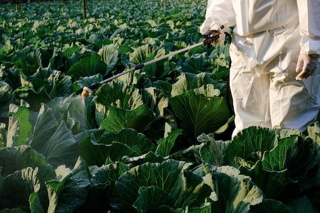 キャベツ野菜植物に殺虫剤と化学をスプレーする防護服の庭師
