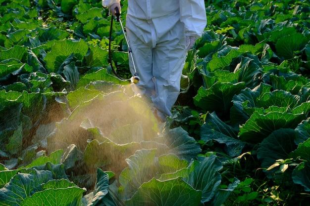 보호복을 입은 정원사 양배추 야채 식물에 살충제 및 화학 스프레이