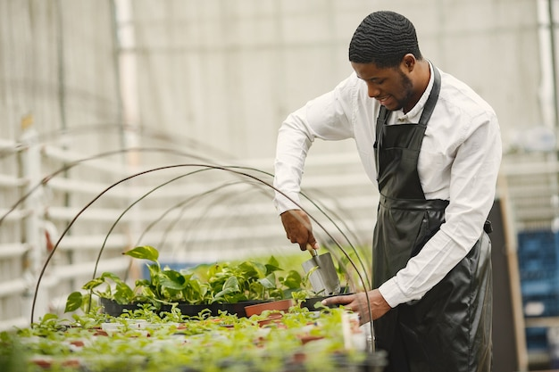 エプロンの庭師。温室のアフリカ人。鉢植えの花。