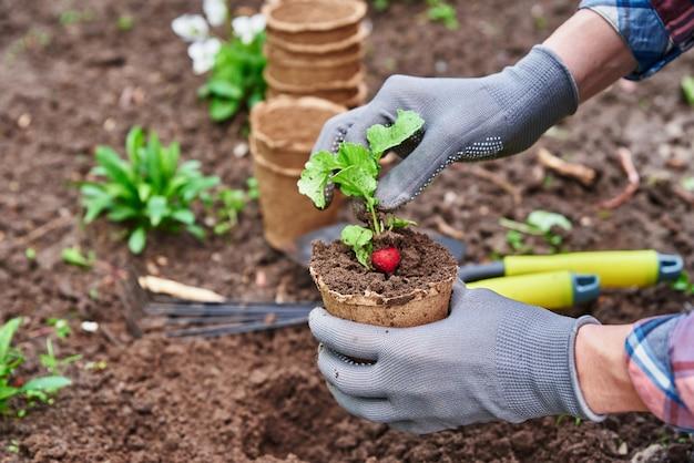 뒷마당 정원 봄 정원 작업 농부 원예 및 수확에 냄비에 농업 식물을 심는 장갑 정원사