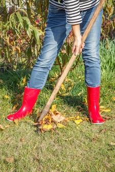 Садовник в джинсовых штанах и красных резиновых сапогах осенью чистит сухие листья старыми граблями.