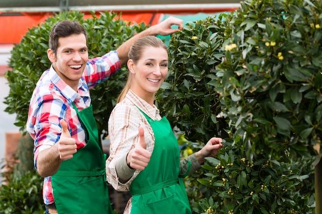 市場の庭や保育園の庭師