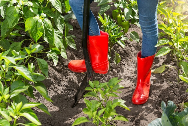 정원에서 흙을 파고 빨간 고무 장화에 정원사