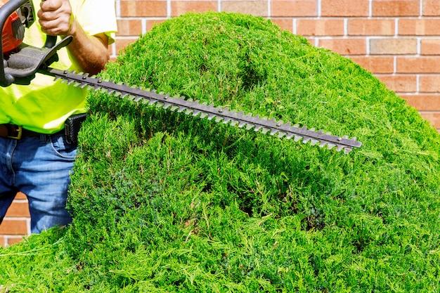 伸縮式ポールソーで木をトリミングする庭師