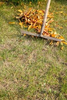 Осенью садовник чистит газон и собирает сухие листья старыми граблями.