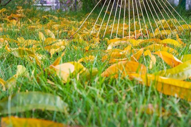 Садовник осенью чистит газон граблями. зеленая трава на заднем плане. малая глубина резкости.