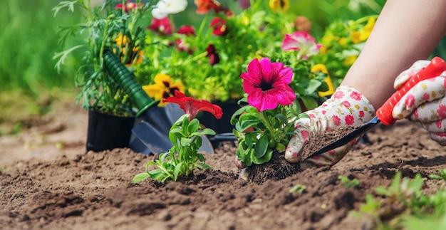 The gardener is planting a flower garden