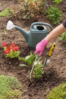 정원사는 정원 침대에서 작은 갈퀴를 사용하여 흰색 마편초 꽃을 심고 있습니다.