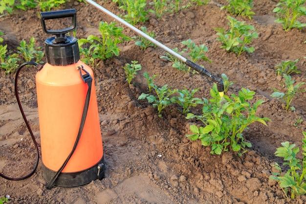 정원사는 정원에 있는 압력 분무기로 곰팡이 질병이나 해충으로부터 감자 식물을 보호하고 있습니다.