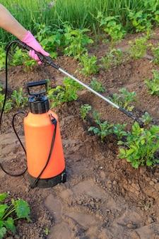 정원사는 정원에 있는 압력 분무기로 곰팡이 질병이나 해충으로부터 감자 식물을 보호하고 있습니다. 프리미엄 사진