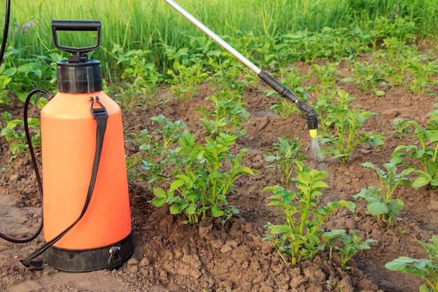 정원사는 정원 침대에 압력 분무기로 곰팡이 질병이나 해충으로부터 감자 식물을 보호하고 있습니다.