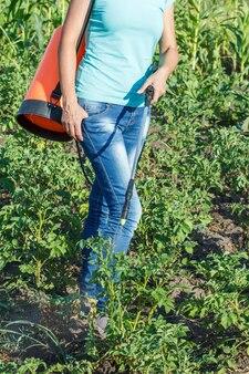 정원사는 여름 화창한 날에 압력 분무기로 곰팡이 질병이나 해충으로부터 감자 식물을 보호하고 있습니다