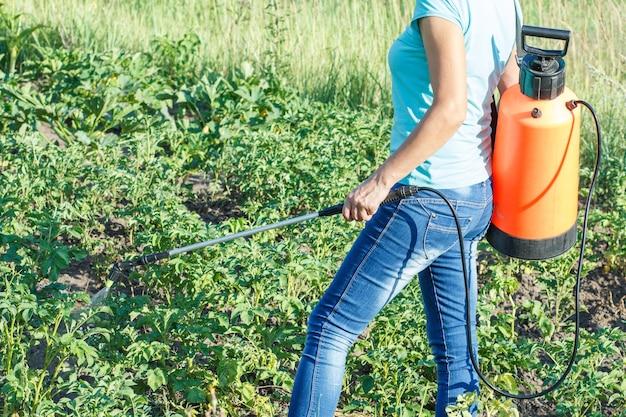 정원사는 정원에 있는 압력 분무기로 곰팡이 질병이나 해충으로부터 감자 식물을 보호하고 있습니다