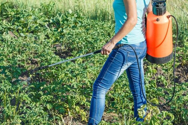 정원사는 압력 분무기로 감자 식물을 곰팡이 질병이나 해충으로부터 보호하고 있습니다.