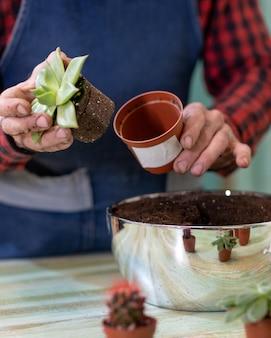 Садоводство, посадка террариумов с суккулентами, кактусами