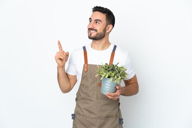 좋은 아이디어를 가리키는 흰 벽에 고립 된 식물을 들고 정원사 남자