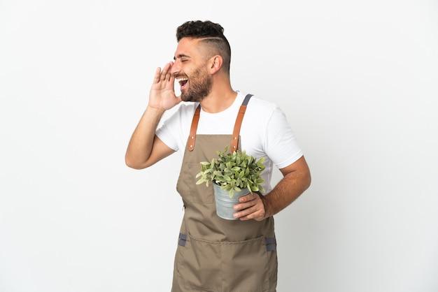 Мужчина-садовник, держащий растение на изолированном белом фоне, кричит с широко открытым ртом в сторону