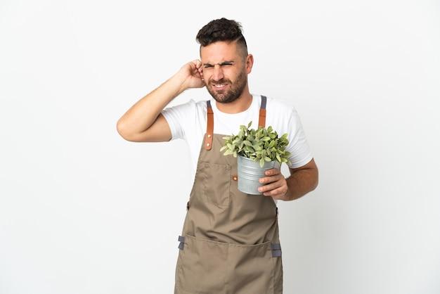 欲求不満と耳を覆っている孤立した白い壁の上に植物を保持している庭師の男