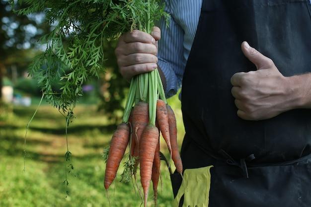 Садовник мужчина держит в руке урожай моркови