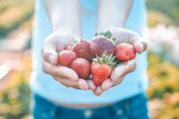정원사는 정원에서 딸기를 따고 있습니다. 수확철에 신선한 유기농 과일을 든 농부입니다.