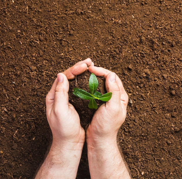 Gardener planting on the ground