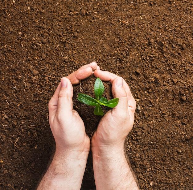 Садовник сажает на землю