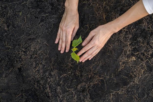 土に苗を植える庭師