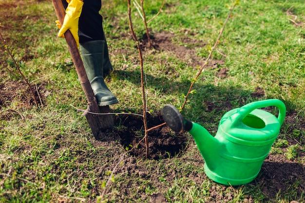 Садовник сажает дерево в саду весной с помощью лопаты