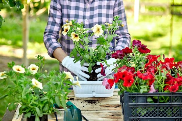 植木鉢ツールを使った庭師の植栽。自宅、屋外の夏の庭で木製のテーブルの後ろに立っている花ペチュニアを植える女性の手。ガーデニングと花のコンセプト。